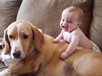 صورة طفل صغير مع كلب