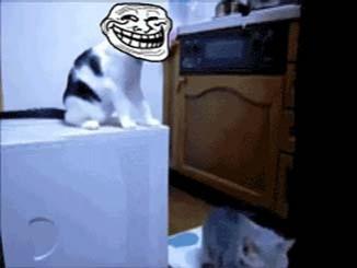 صوره قطه خبيثة ومضحكة