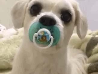 صوره كلب صغير