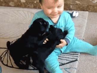 صوره متحركه لطفل يلعب مع كلبين